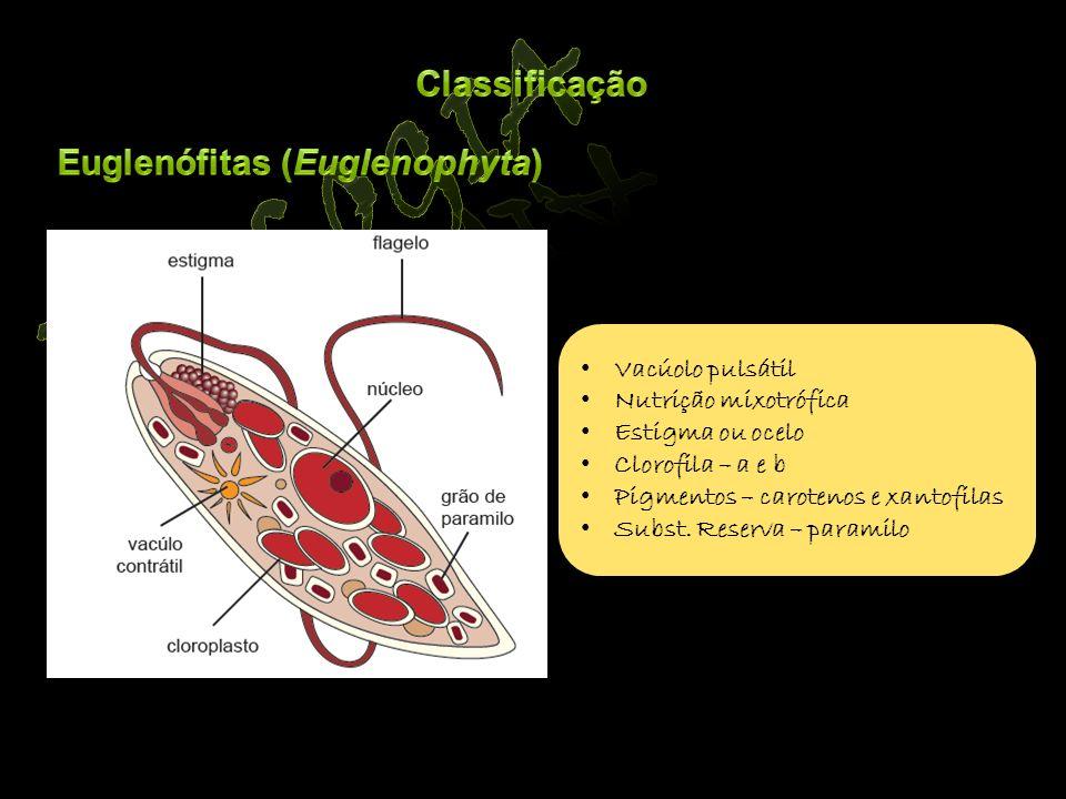 Biologia Classificação Euglenófitas (Euglenophyta) Vacúolo pulsátil