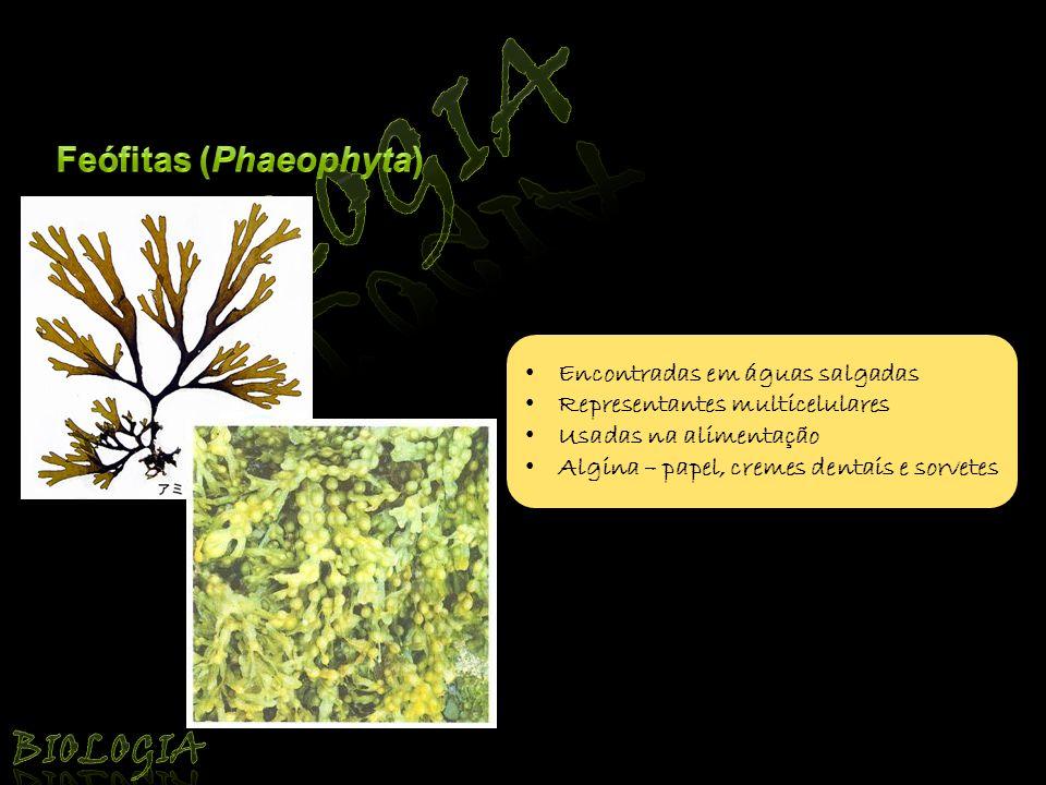 Biologia Biologia Feófitas (Phaeophyta) Encontradas em águas salgadas