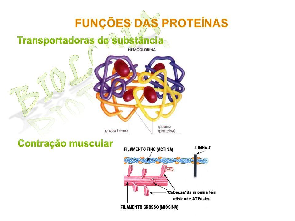Biologia Funções das proteínas Transportadoras de substância