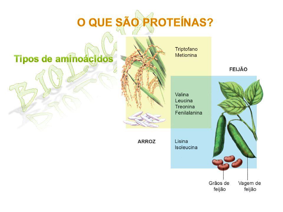 O que são proteínas Biologia Tipos de aminoácidos