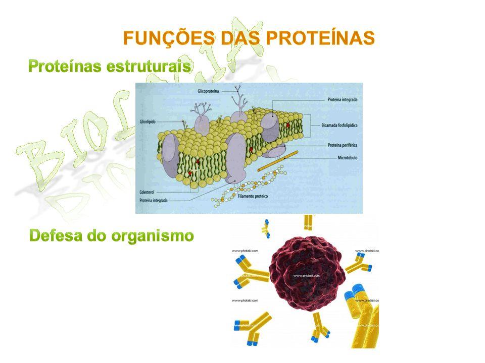 Biologia Funções das proteínas Proteínas estruturais