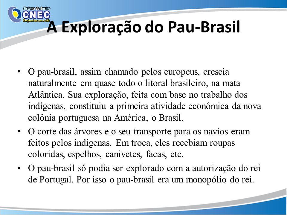 A Exploração do Pau-Brasil