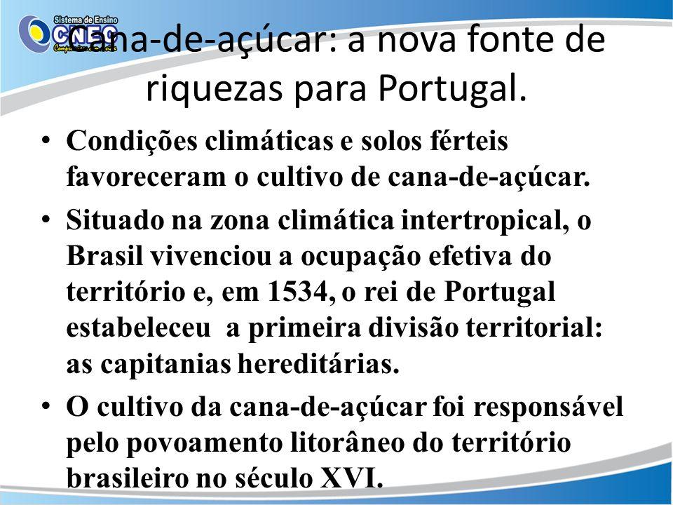 Cana-de-açúcar: a nova fonte de riquezas para Portugal.