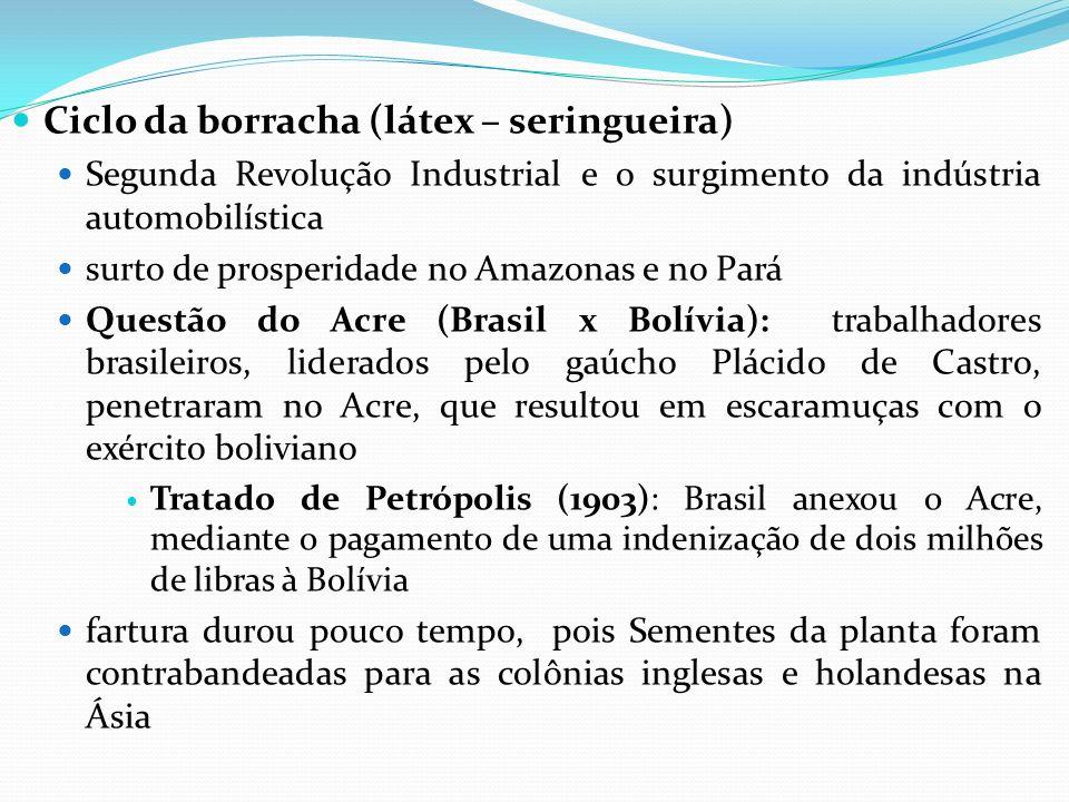 Ciclo da borracha (látex – seringueira)