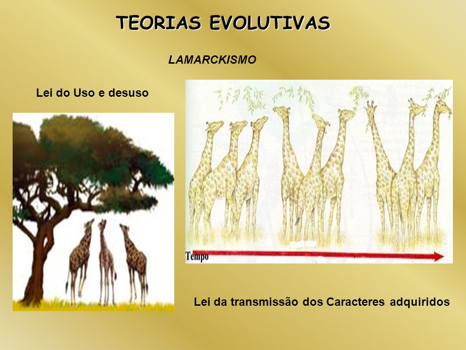 TEORIAS EVOLUTIVAS LAMARCKISMO Lei do Uso e desuso