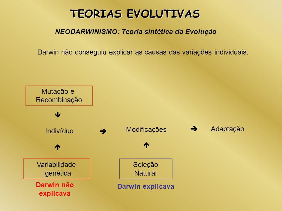 TEORIAS EVOLUTIVAS NEODARWINISMO: Teoria sintética da Evolução