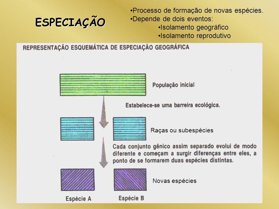 ESPECIAÇÃO Processo de formação de novas espécies.