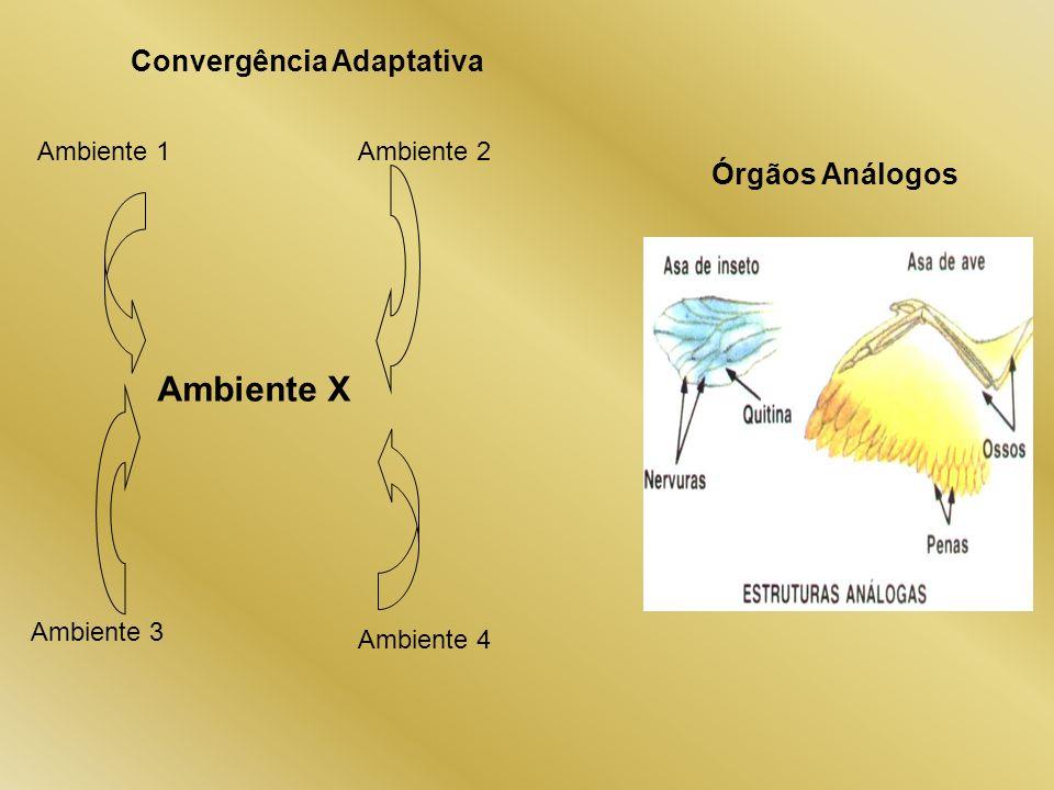 Ambiente X Convergência Adaptativa Órgãos Análogos Ambiente 1