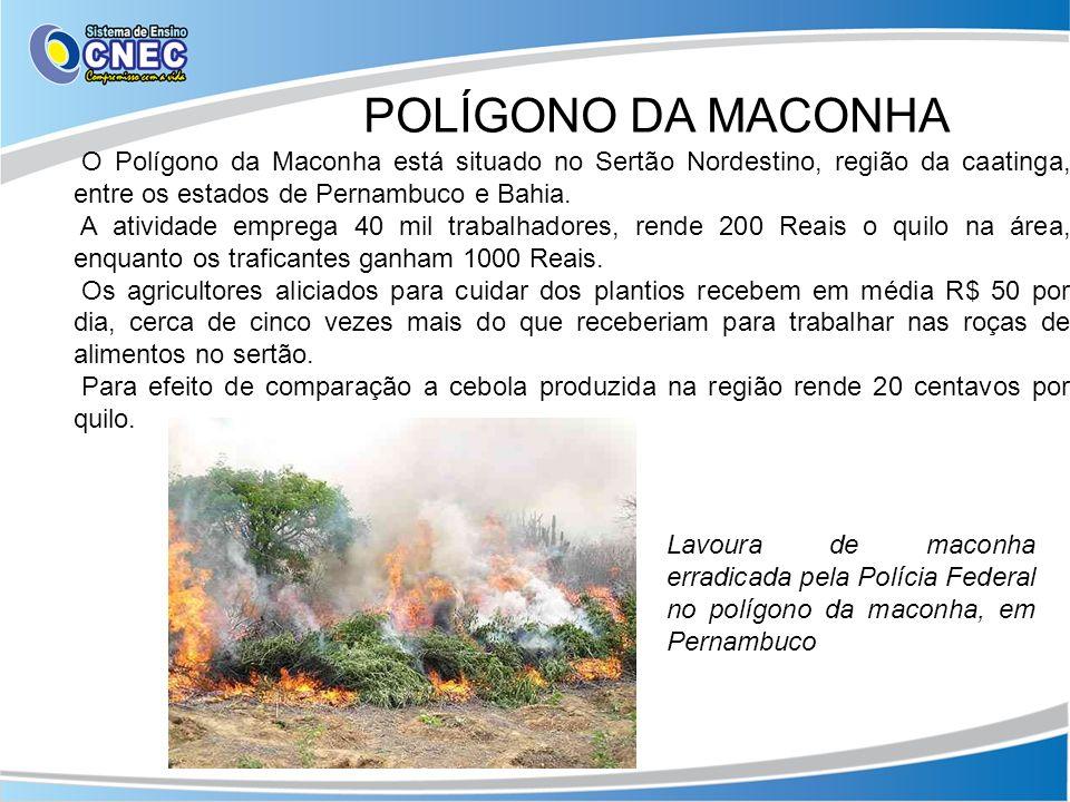 POLÍGONO DA MACONHA O Polígono da Maconha está situado no Sertão Nordestino, região da caatinga, entre os estados de Pernambuco e Bahia.