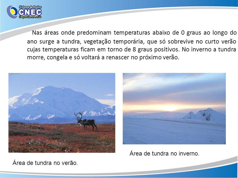 Nas áreas onde predominam temperaturas abaixo de 0 graus ao longo do ano surge a tundra, vegetação temporária, que só sobrevive no curto verão cujas temperaturas ficam em torno de 8 graus positivos. No inverno a tundra morre, congela e só voltará a renascer no próximo verão.