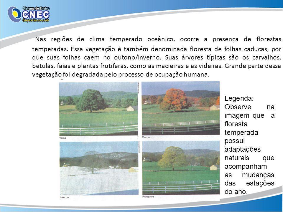 Nas regiões de clima temperado oceânico, ocorre a presença de florestas temperadas. Essa vegetação é também denominada floresta de folhas caducas, por que suas folhas caem no outono/inverno. Suas árvores típicas são os carvalhos, bétulas, faias e plantas frutíferas, como as macieiras e as videiras. Grande parte dessa vegetação foi degradada pelo processo de ocupação humana.