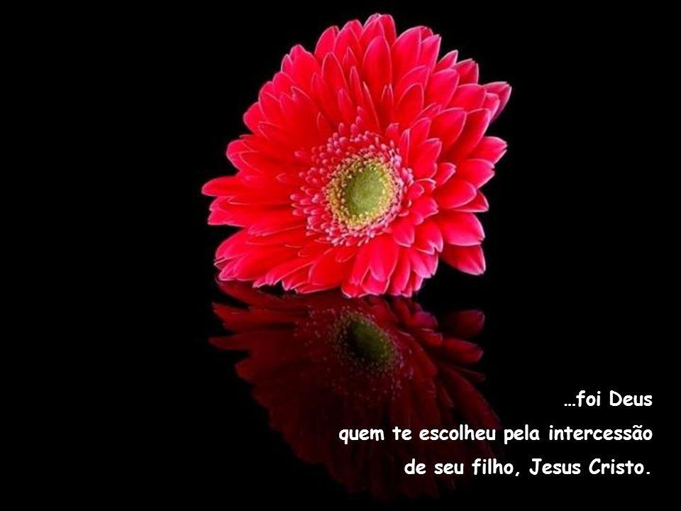…foi Deus quem te escolheu pela intercessão de seu filho, Jesus Cristo.