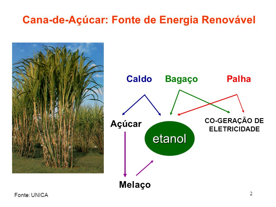Cana-de-Açúcar: Fonte de Energia Renovável