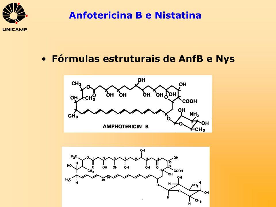 Anfotericina B e Nistatina