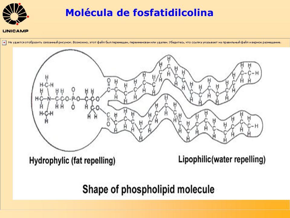 Molécula de fosfatidilcolina