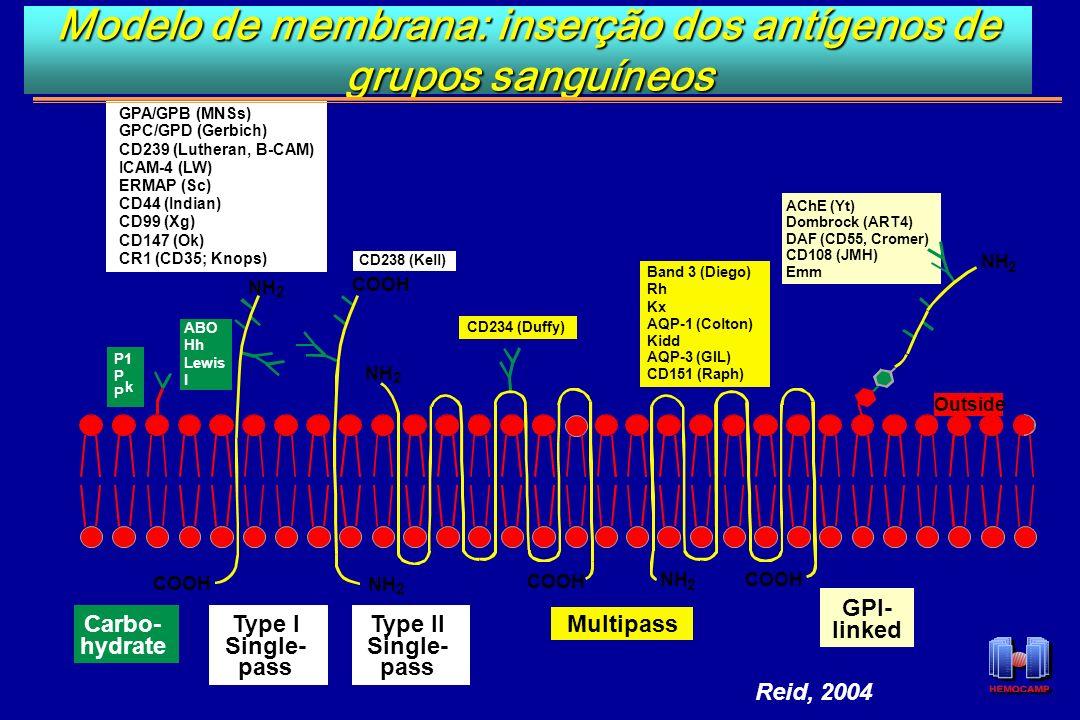 Modelo de membrana: inserção dos antígenos de grupos sanguíneos