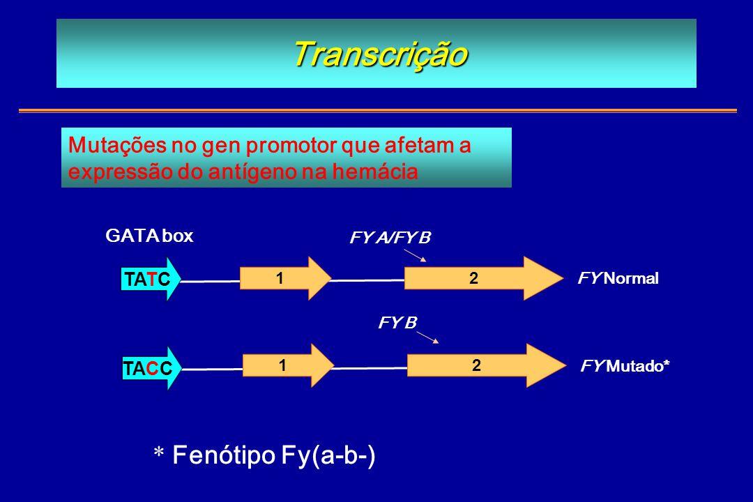 Transcrição * Fenótipo Fy(a-b-) Mutações no gen promotor que afetam a