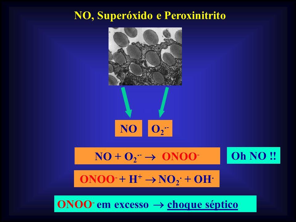 NO, Superóxido e Peroxinitrito