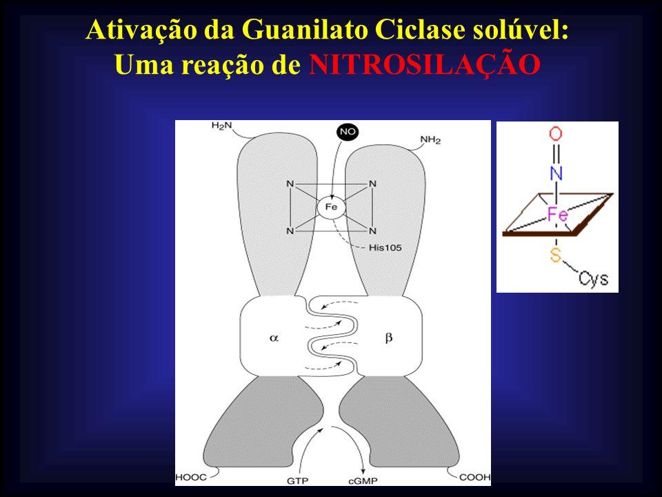 Ativação da Guanilato Ciclase solúvel: Uma reação de NITROSILAÇÃO