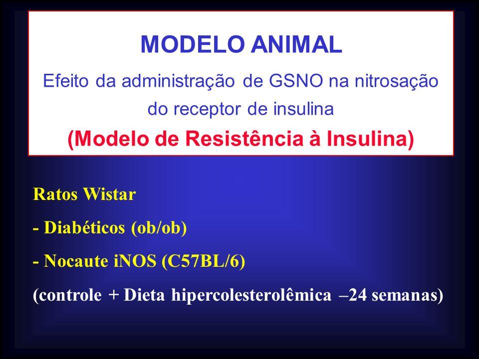 (Modelo de Resistência à Insulina)