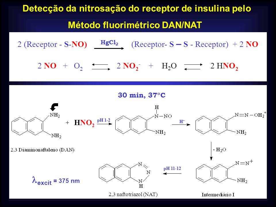 Detecção da nitrosação do receptor de insulina pelo