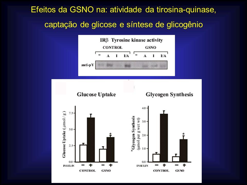 Efeitos da GSNO na: atividade da tirosina-quinase, captação de glicose e síntese de glicogênio