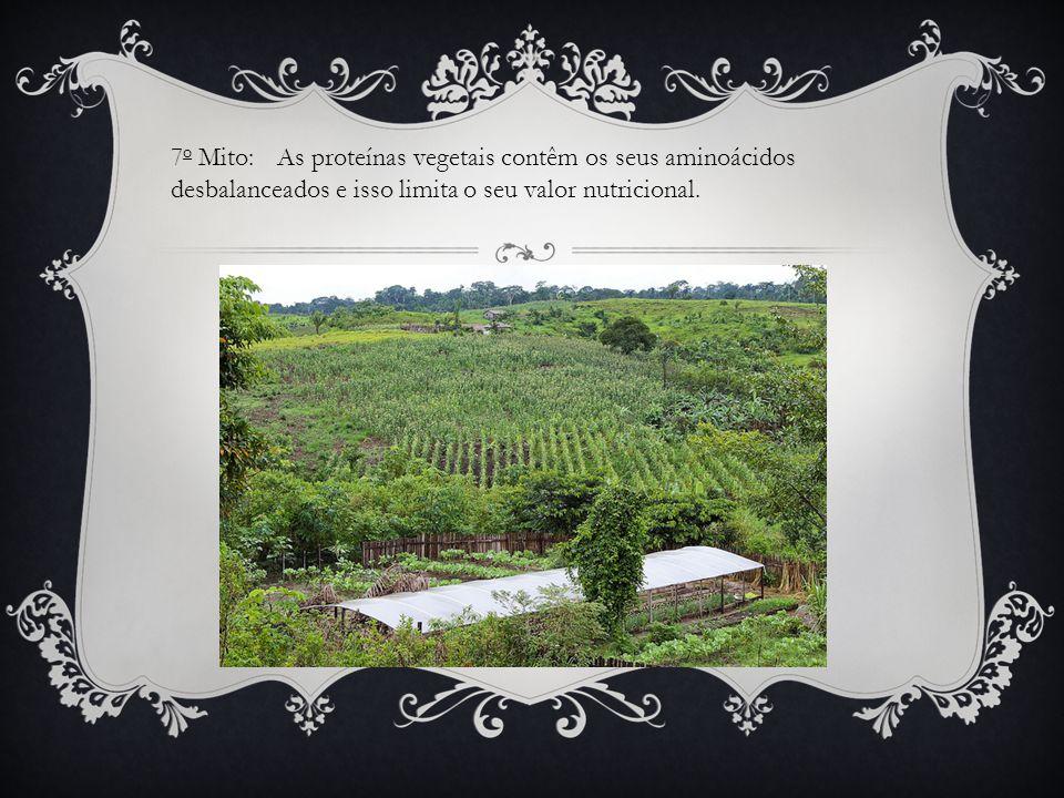 7o Mito: As proteínas vegetais contêm os seus aminoácidos desbalanceados e isso limita o seu valor nutricional.