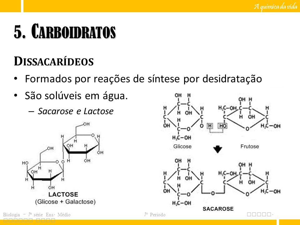 5. Carboidratos Dissacarídeos