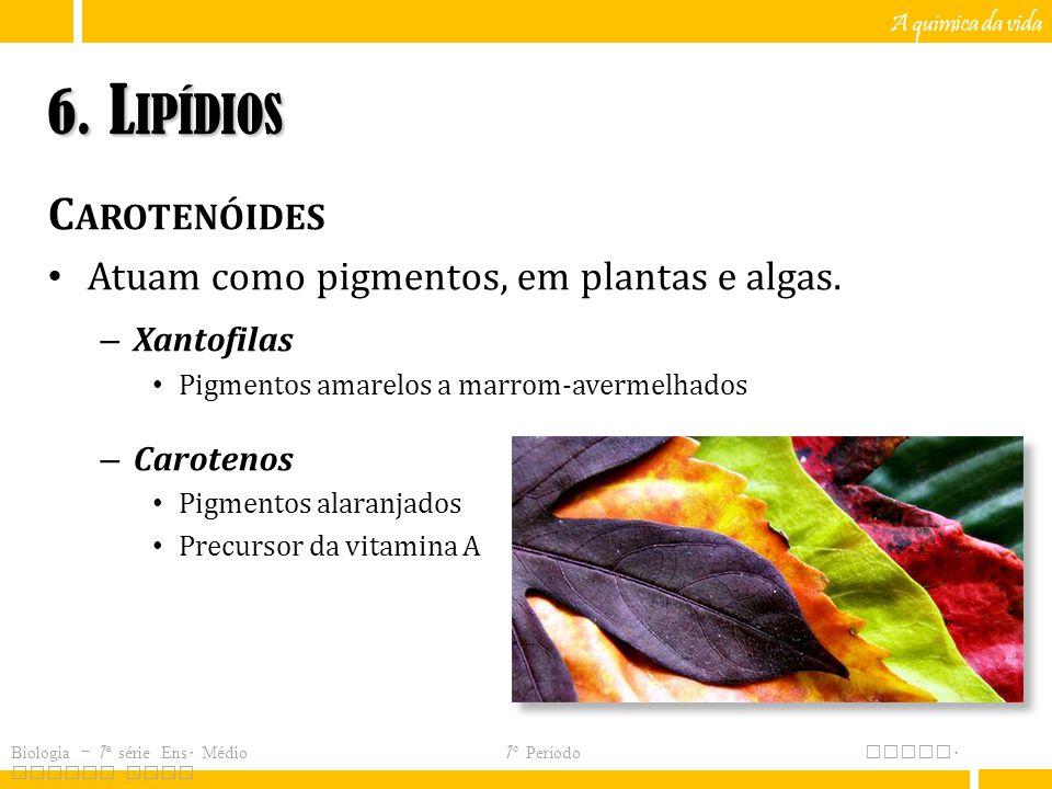 6. Lipídios Carotenóides Atuam como pigmentos, em plantas e algas.