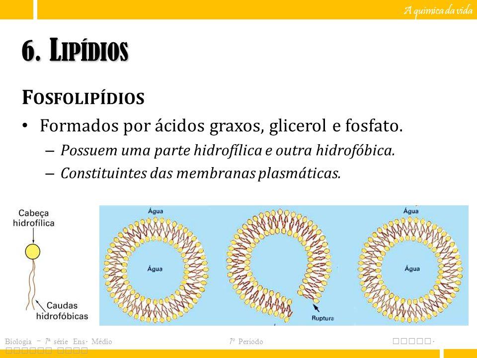 6. Lipídios Fosfolipídios