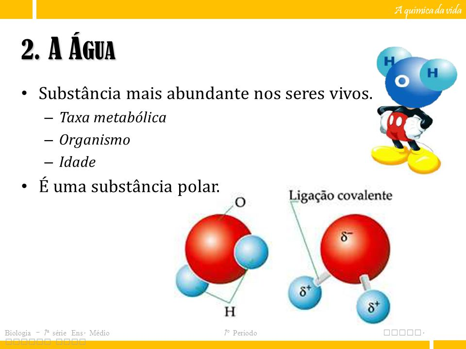 2. A Água Substância mais abundante nos seres vivos.