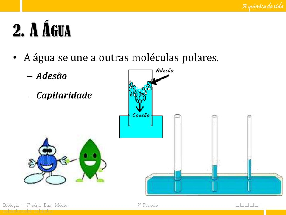 2. A Água A água se une a outras moléculas polares. Adesão