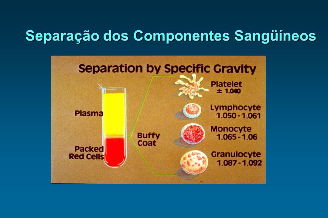 Separação dos Componentes Sangüíneos