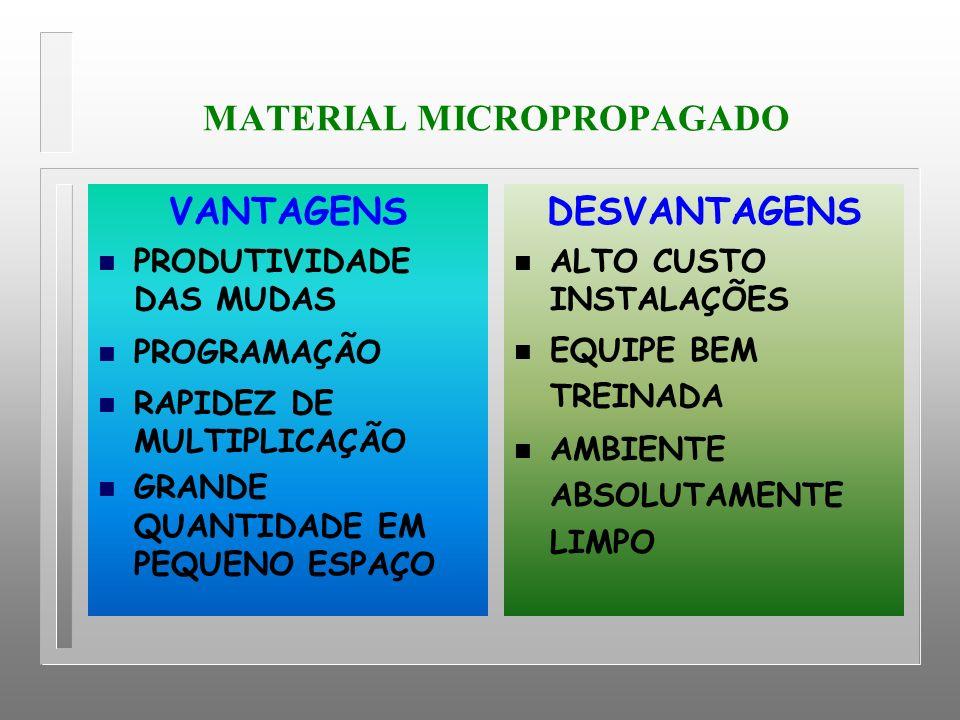 MATERIAL MICROPROPAGADO