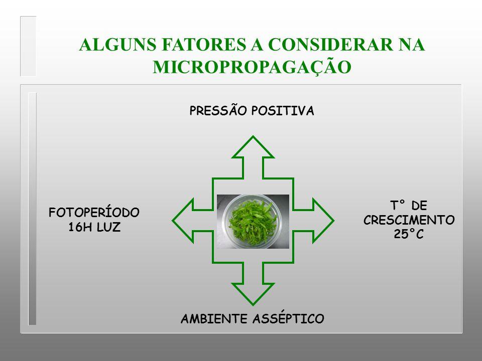 ALGUNS FATORES A CONSIDERAR NA MICROPROPAGAÇÃO