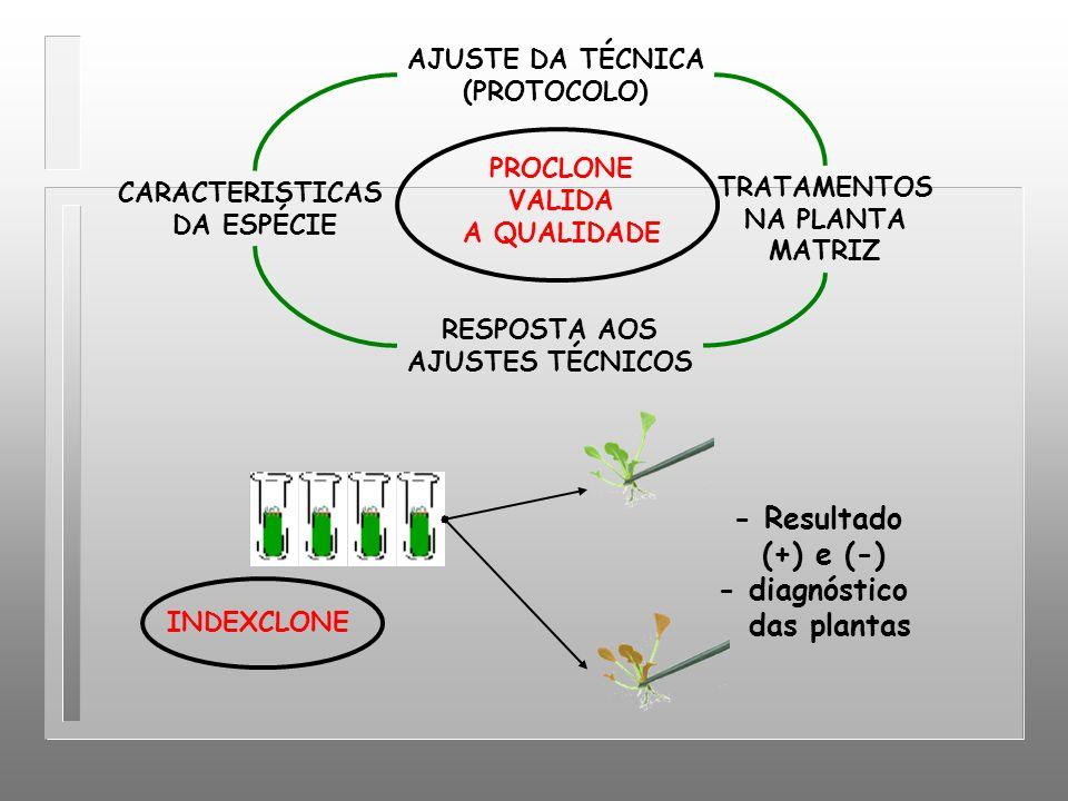 AJUSTE DA TÉCNICA (PROTOCOLO) TRATAMENTOS NA PLANTA MATRIZ