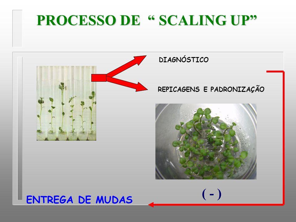 PROCESSO DE SCALING UP