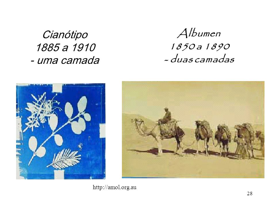 Albumen 1850 a 1890 - duas camadas