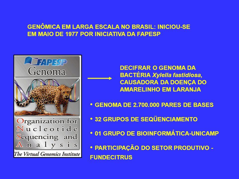 • GENOMA DE 2.700.000 PARES DE BASES • 32 GRUPOS DE SEQÜENCIAMENTO