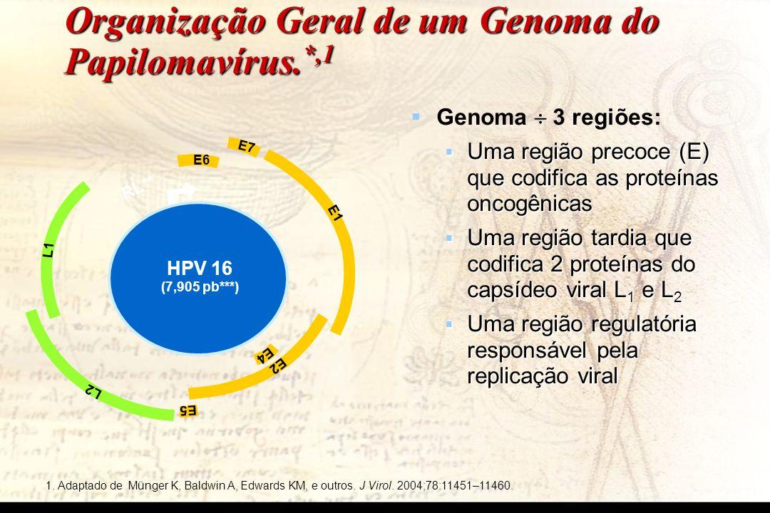 Organização Geral de um Genoma do Papilomavírus.*,1