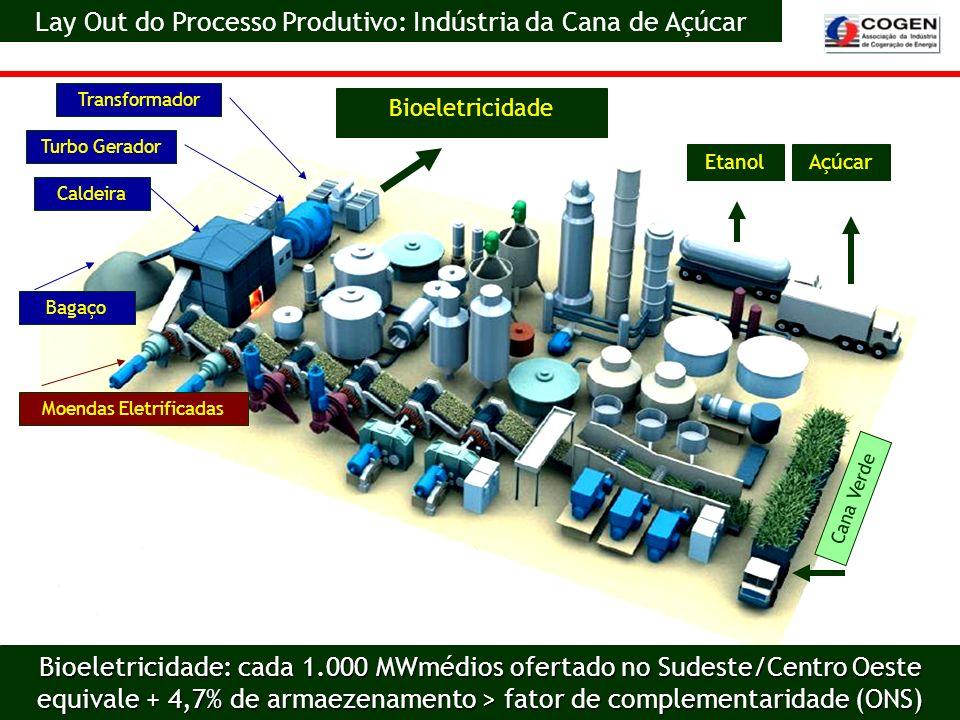 Lay Out do Processo Produtivo: Indústria da Cana de Açúcar