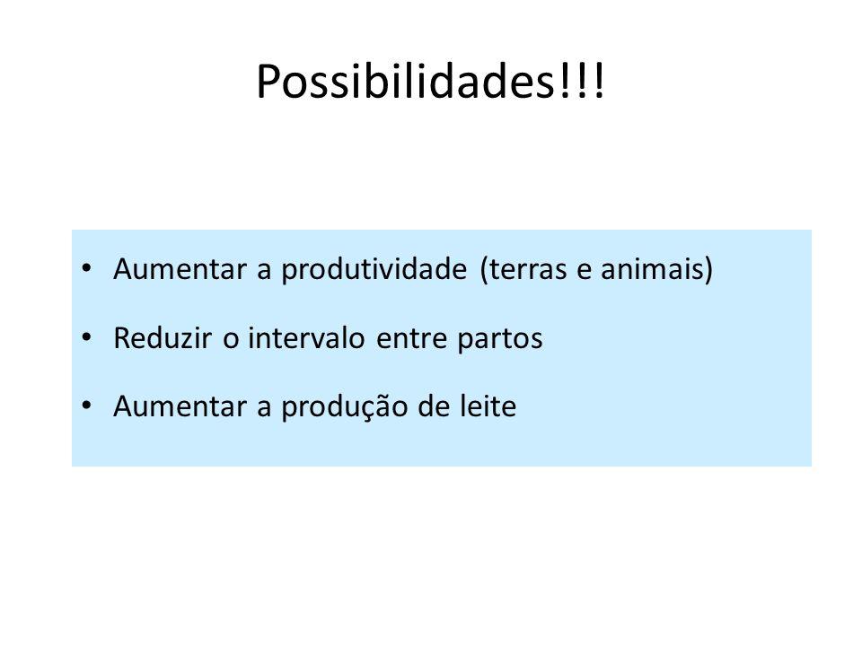 Possibilidades!!! Aumentar a produtividade (terras e animais)