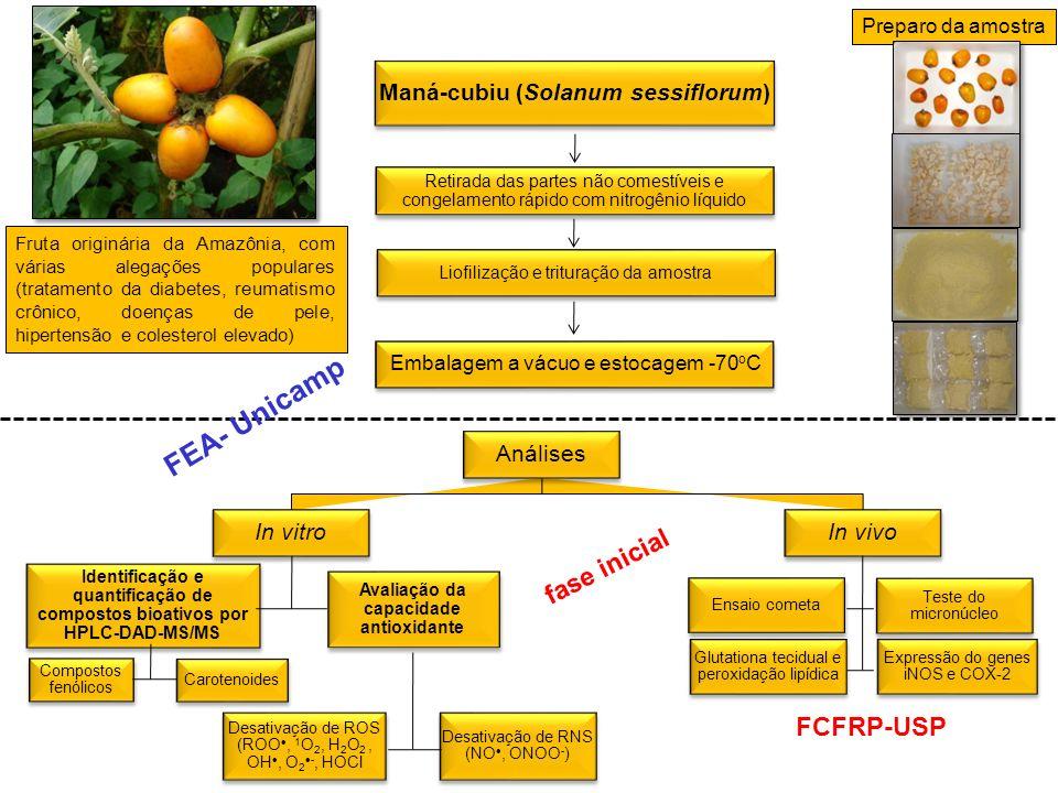 Maná-cubiu (Solanum sessiflorum) Avaliação da capacidade antioxidante