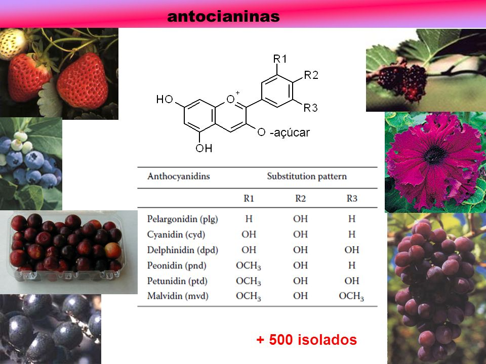 antocianinas -açúcar + 500 isolados