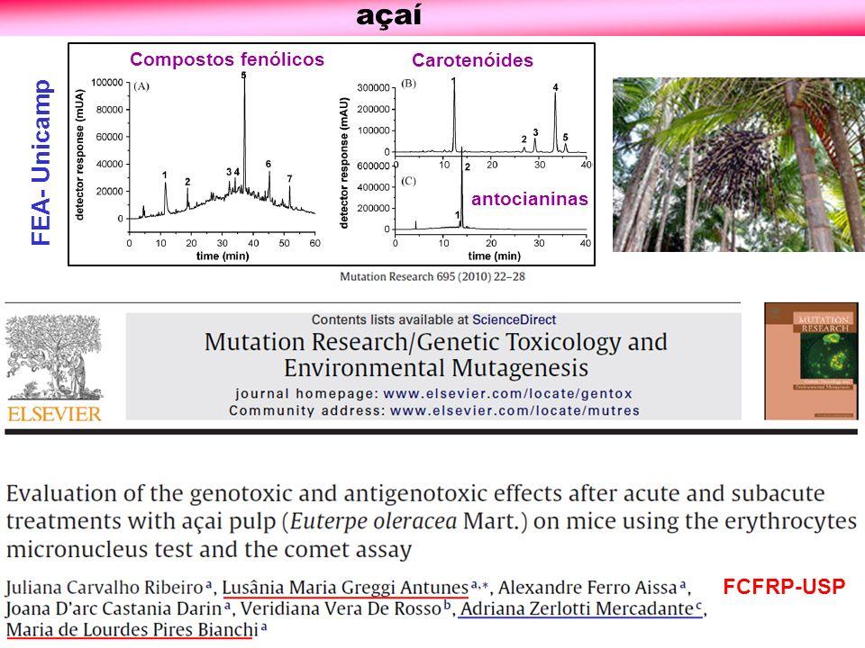 açaí FEA- Unicamp FCFRP-USP Compostos fenólicos Carotenóides