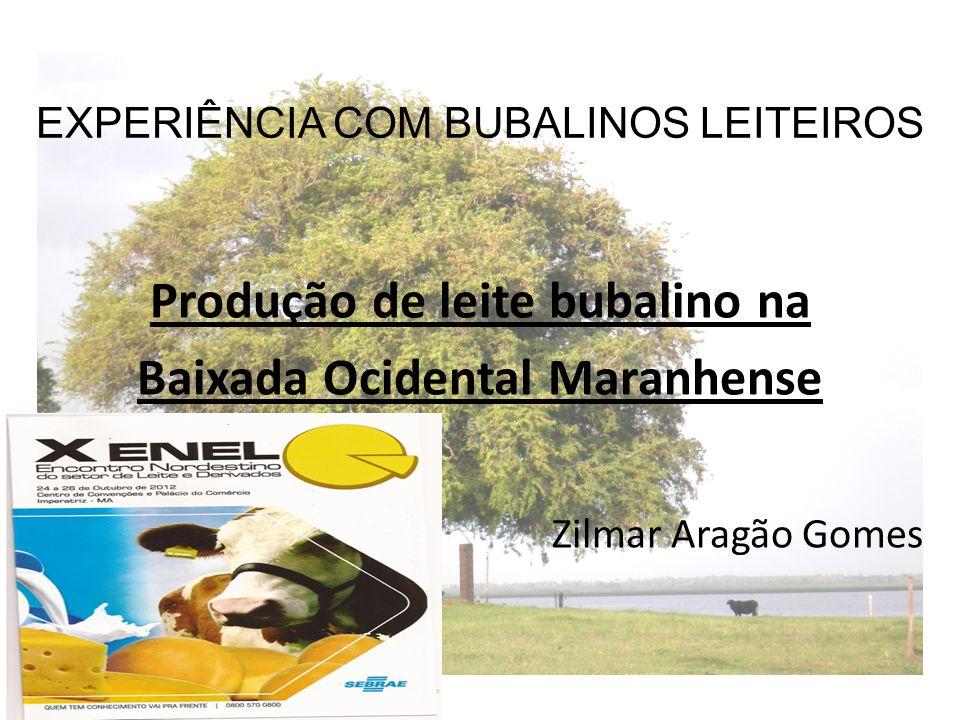 EXPERIÊNCIA COM BUBALINOS LEITEIROS