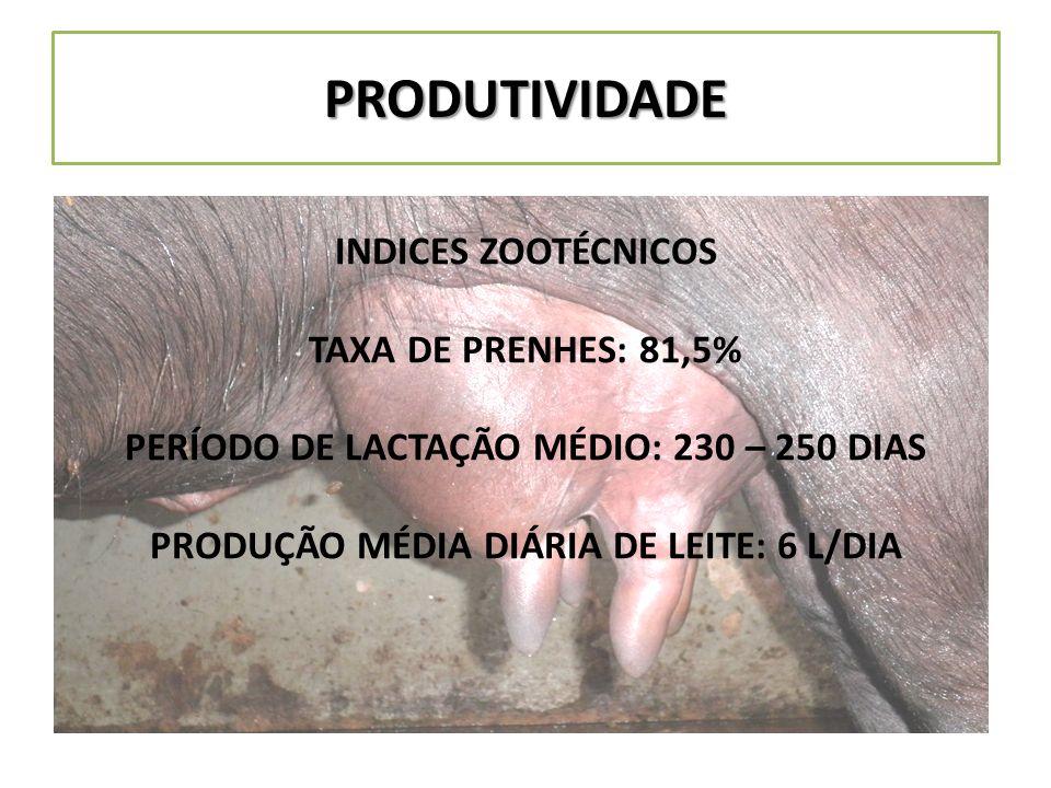 PRODUTIVIDADE INDICES ZOOTÉCNICOS TAXA DE PRENHES: 81,5%