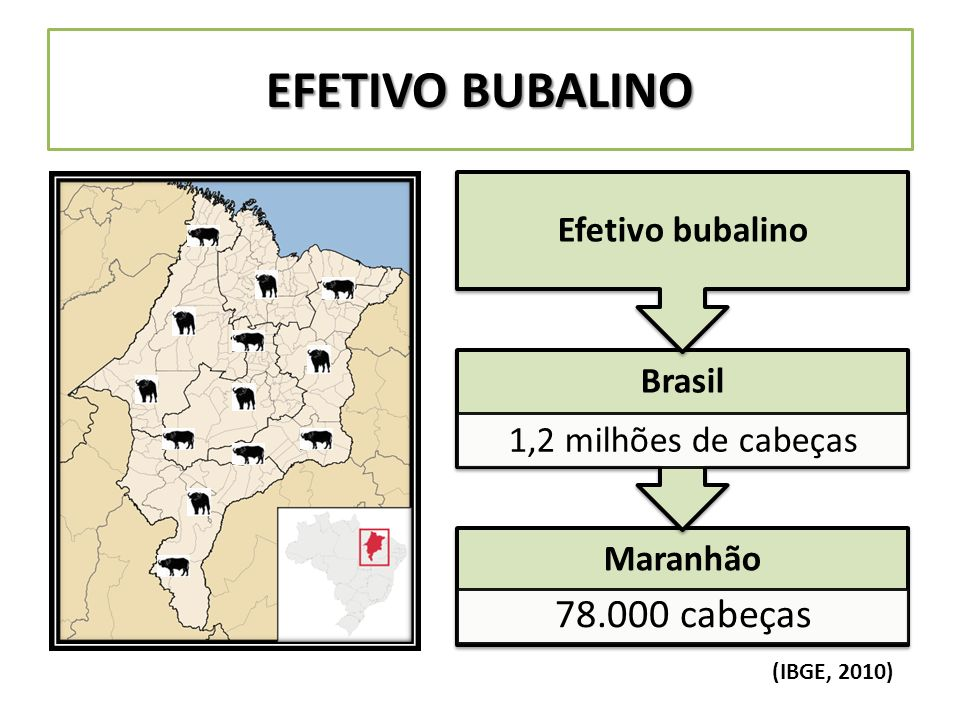 EFETIVO BUBALINO 1,2 milhões de cabeças Efetivo bubalino Maranhão
