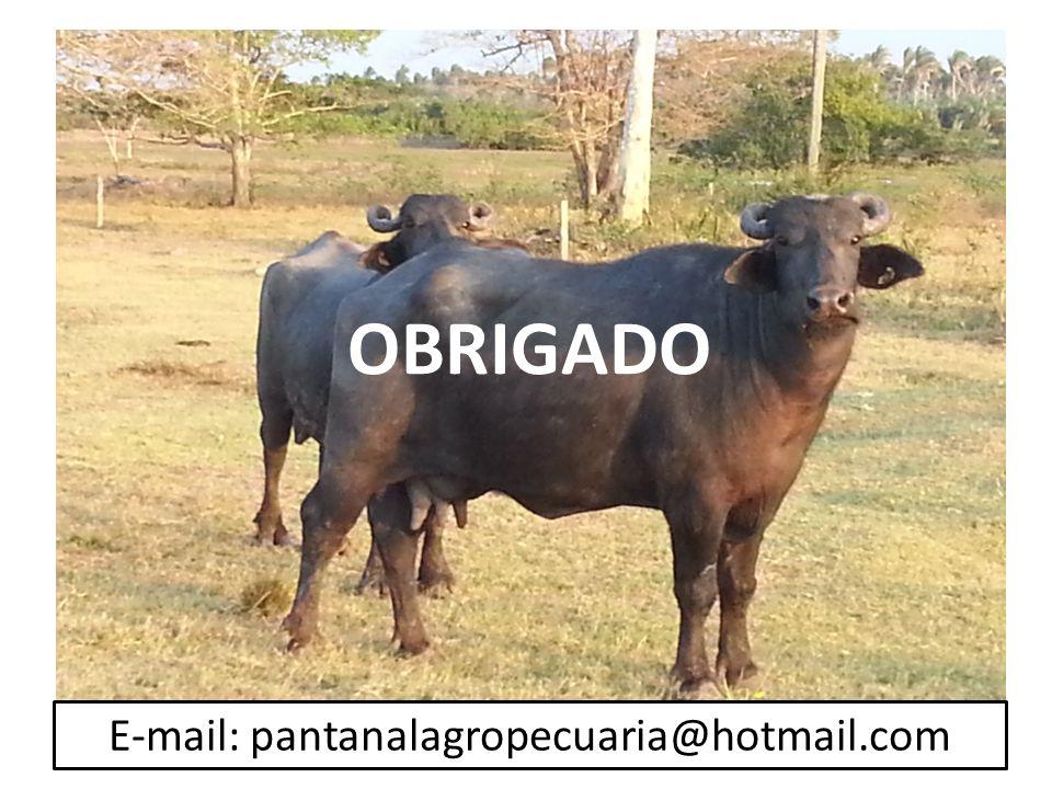 E-mail: pantanalagropecuaria@hotmail.com