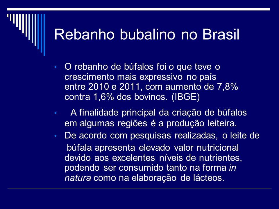 Rebanho bubalino no Brasil